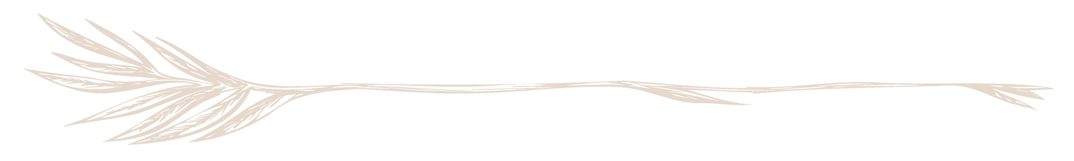 Pats Divider-04